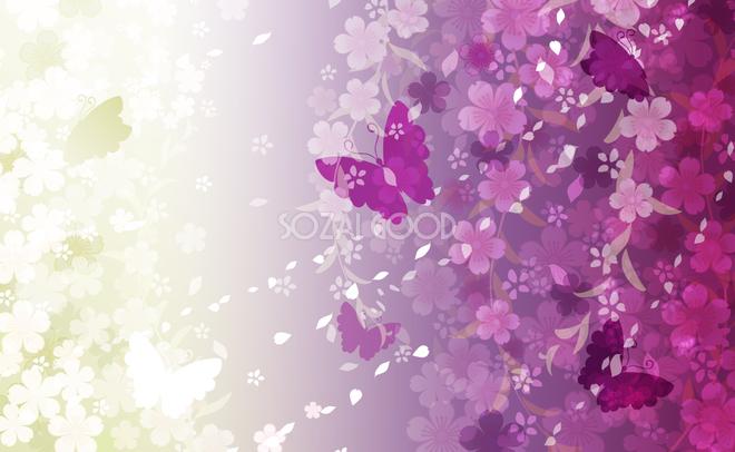 壁紙 桜 イラスト
