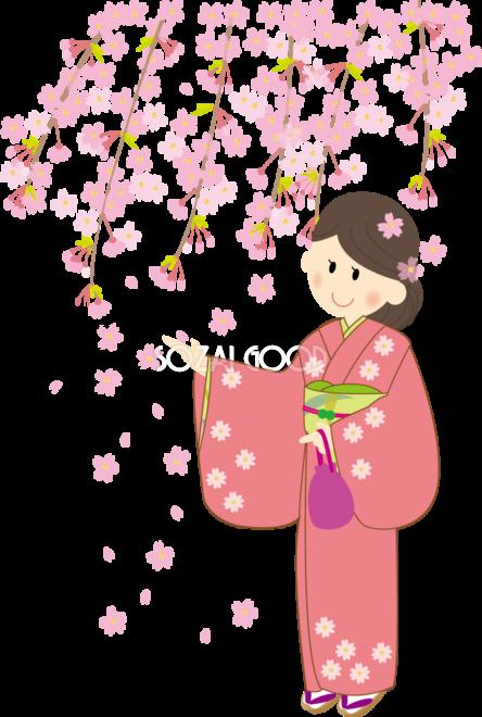 花見をする和風の背景に着物姿の可愛い女の子少女桜無料イラスト