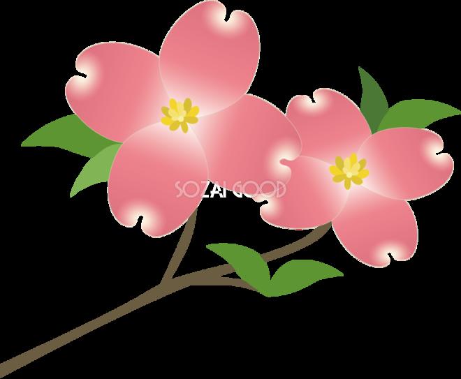 ハナミズキ お花 無料イラスト