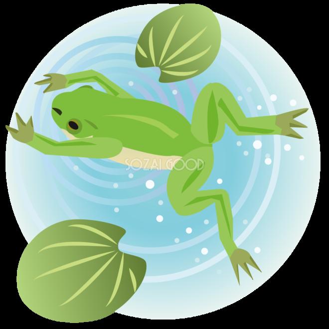 水辺で泳ぐリアルなカエル無料イラスト 素材good