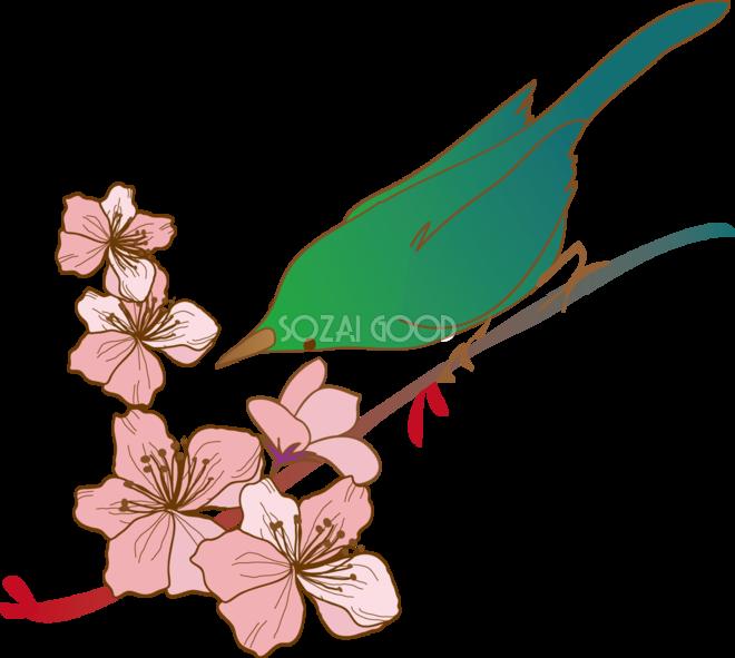 綺麗かっこいい桜と鳥の春イラスト39544 素材good