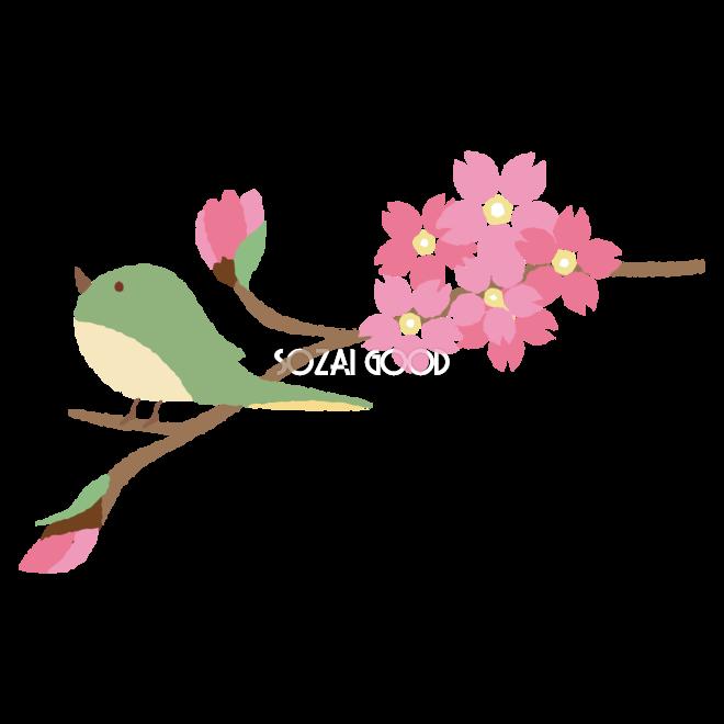 鶯と桜のかわいい無料イラスト 春41395 素材good