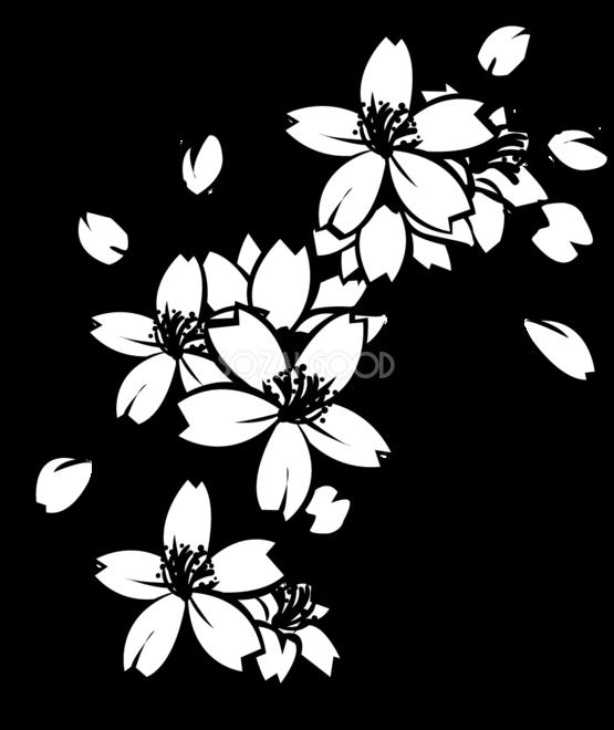白黒の桜の花と枝の無料イラスト 春 素材good
