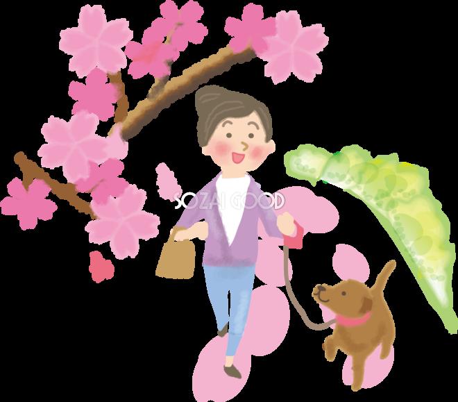 お花見の犬のおでかけ散歩 無料イラスト/春42274 | 素材Good