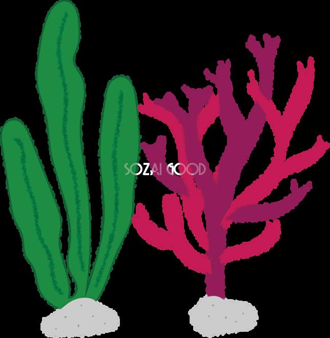 海藻の無料イラスト海46154 素材good