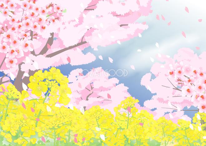 桜満開と菜の花畑の背景無料イラスト62413 素材good
