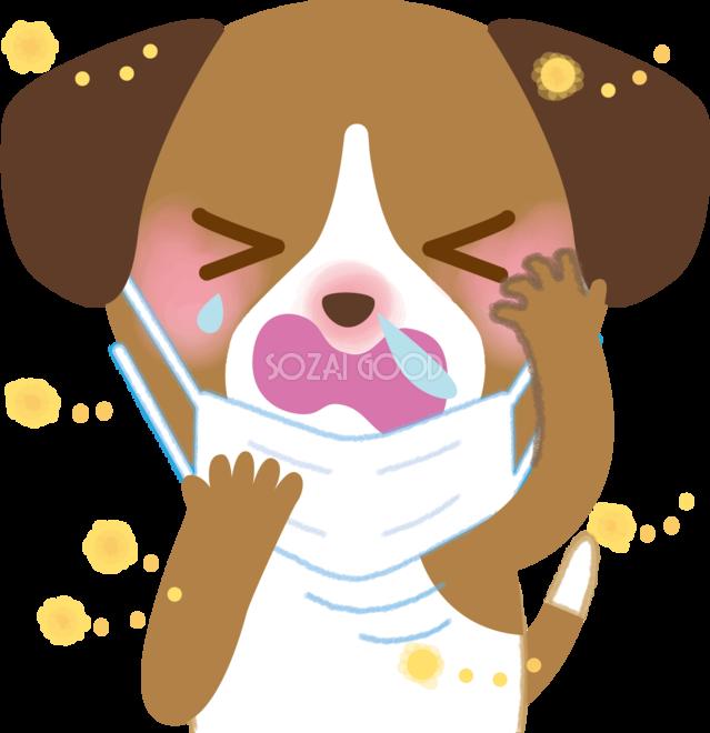 症 犬 花粉