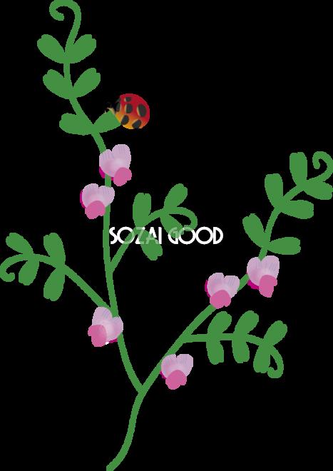 からすのえんどうの花とてんとう虫の無料イラスト 冬春2月5月63525