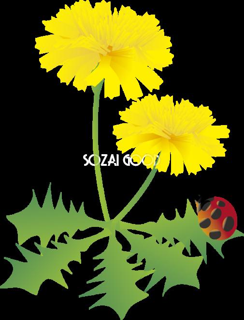 たんぽぽの花とてんとう虫の無料イラスト 春35月63537 素材good