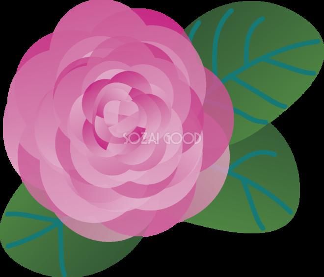 かわいい 椿の花 背景 イラスト 無料 無料イラストのイラスト