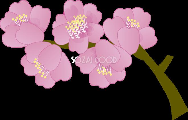 寒緋桜かんひざくらの花無料イラスト 春3月63594 素材good