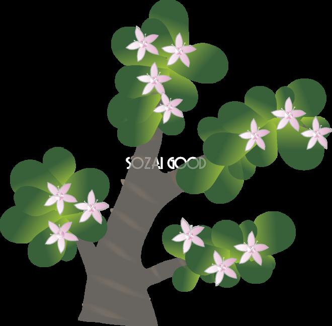 金のなる木の花無料イラスト 冬12~4月63599