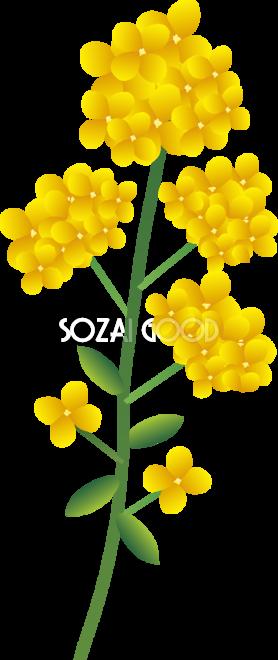 かわいい菜の花一輪無料イラスト 冬春2月5月63607 素材good