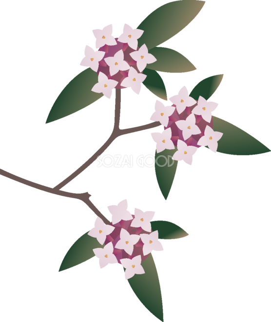 沈丁花じんちょうげの花無料イラスト 冬春2月3月63673 素材good