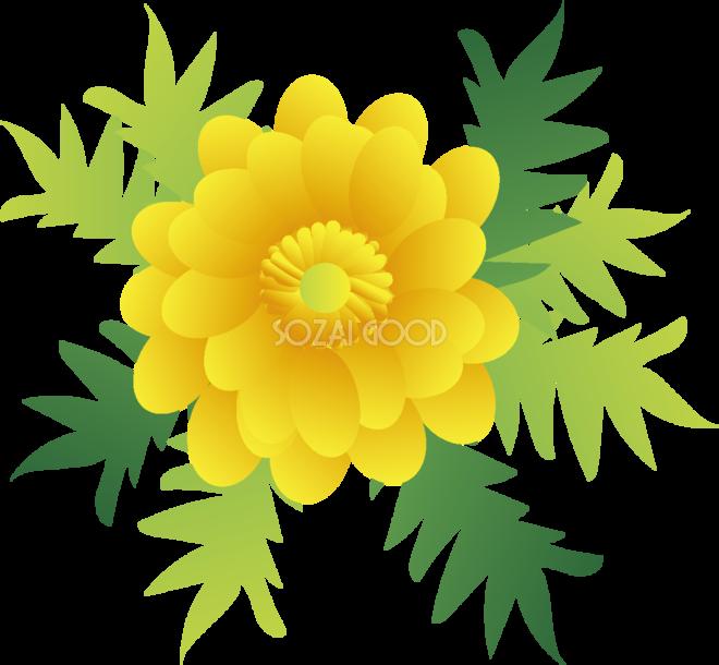 福寿草の花無料イラスト 冬2~3月63717