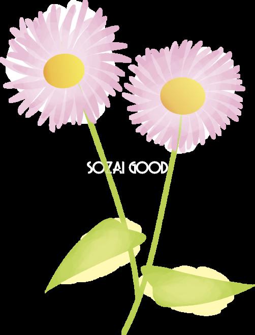 春紫苑 はるじおん 花の無料イラスト 春 4月 5月 素材good