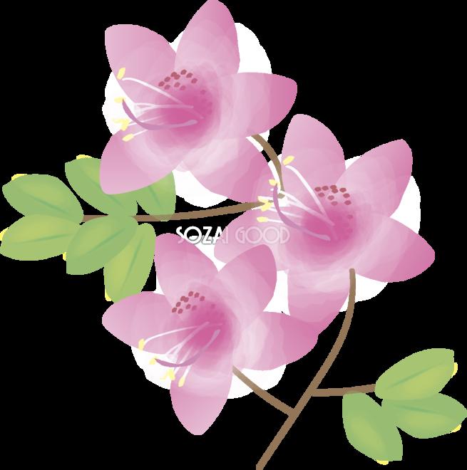 大紫躑躅 つつじ 花の無料イラスト 春 4月 5月 素材good