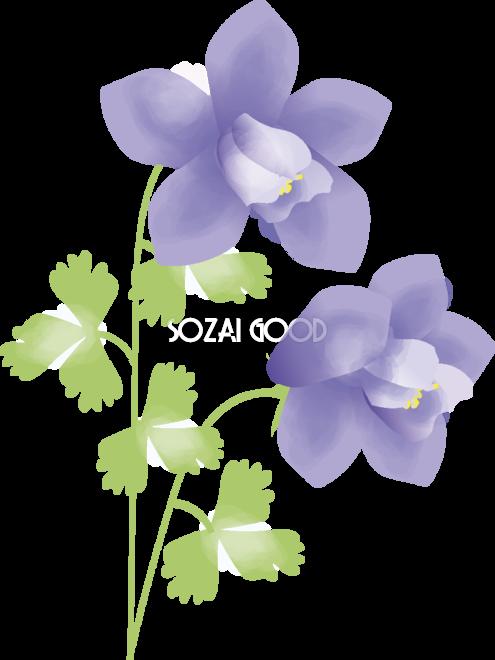 苧環おだまき花の無料イラスト春4月 5月66972 素材good
