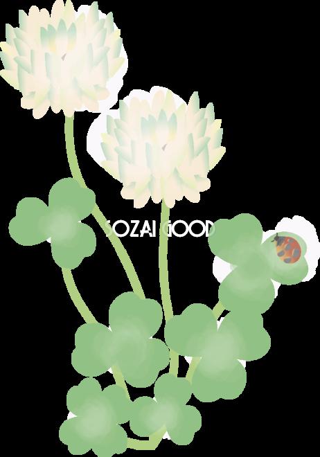 白詰草しろつめくさ花の無料イラスト春4月 8月67001 素材good