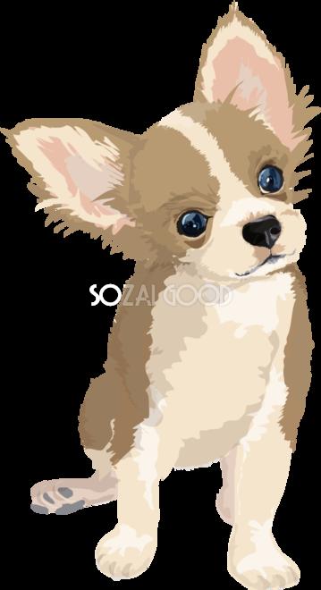 チワワのリアルな犬の無料イラスト68103