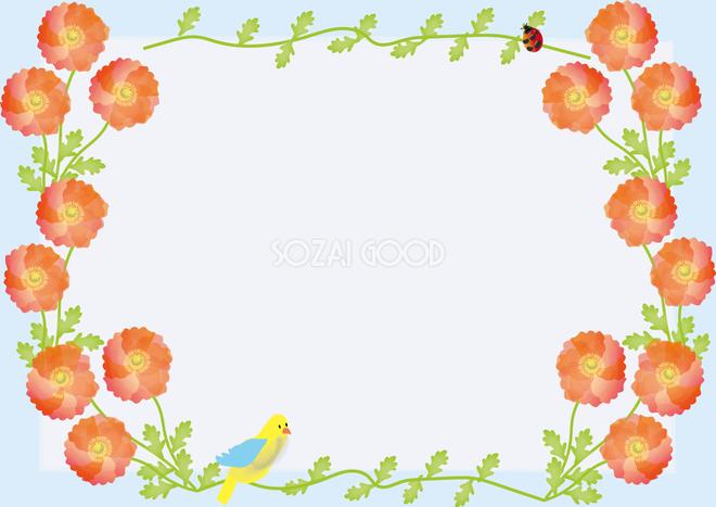 雛罌粟ひなげし春4月 5月の花フレーム無料イラスト68681 素材good