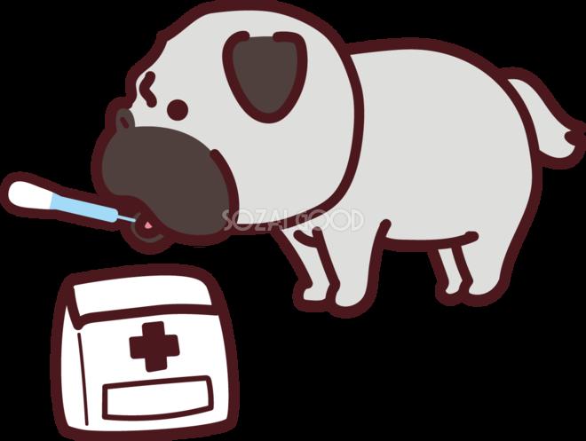 パグが薬を飲む かわいい犬の無料イラスト69219 素材good