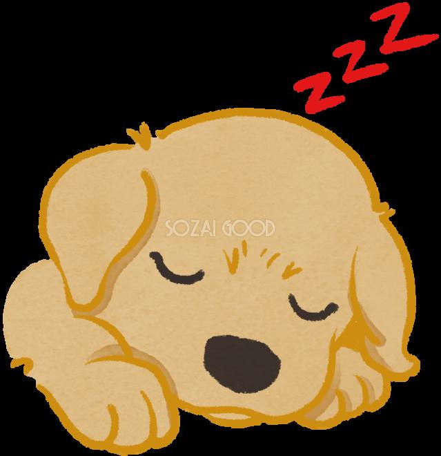 ゴールデンレトリバー子犬寝顔かわいい犬の無料イラスト69979 素材good