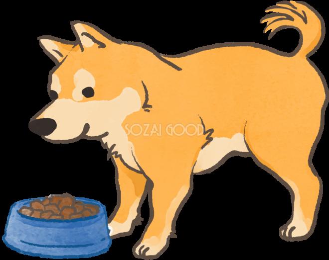 柴犬ご飯食べるかわいい犬の無料イラスト70132 素材good