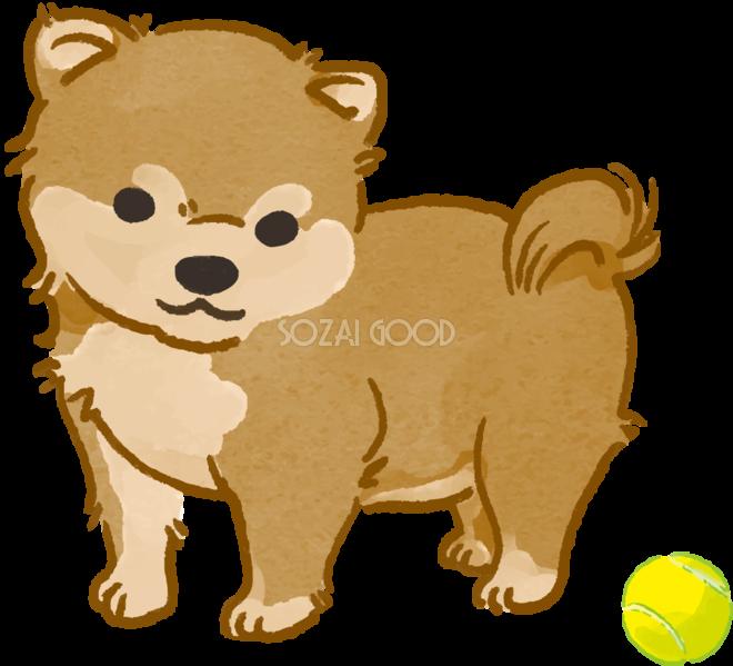 柴犬子犬ボールで遊ぶかわいい犬の無料イラスト70144 素材good