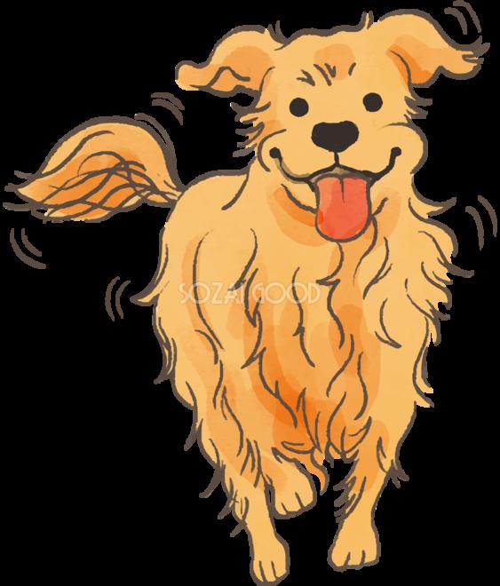 ゴールデンレトリバー走るかわいい犬の無料イラスト70269 素材good