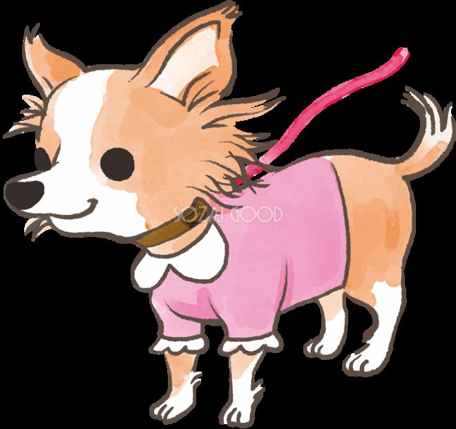 チワワ散歩に行くかわいい犬の無料イラスト70289 素材good
