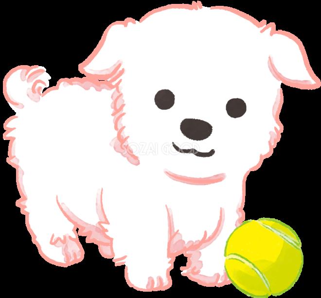 マルチーズ子犬ボールで遊ぶかわいい犬の無料イラスト70691 素材good