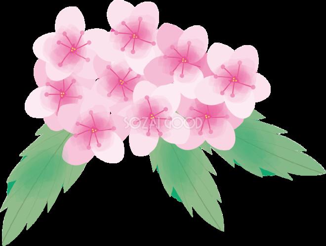 下野(しもつけ)【花の無料イラスト】夏6月,8月72137