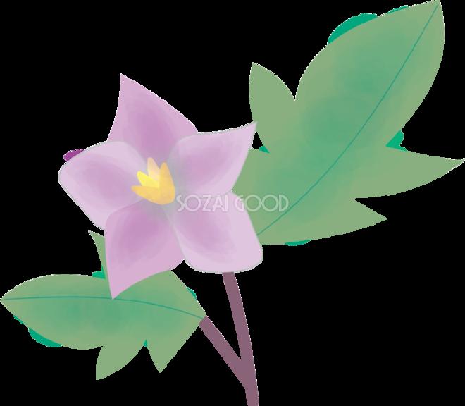 茄子なす花の無料イラスト夏6月 8月72145 素材good
