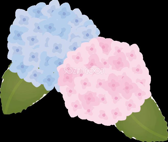 紫陽花あじさい花の無料イラスト夏6月 7月72219 素材good