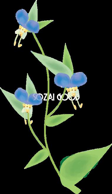 露草 つゆくさ 花の無料イラスト 夏6月 10月 素材good
