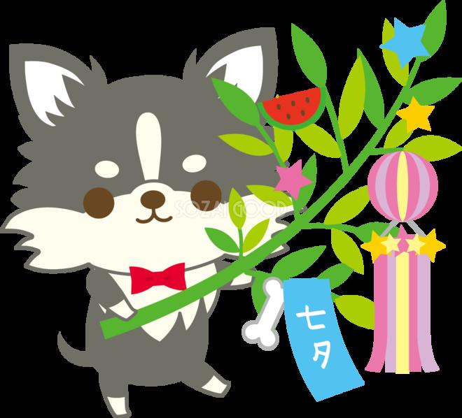 チワワ犬七夕笹を持つ動物無料イラスト72417 素材good