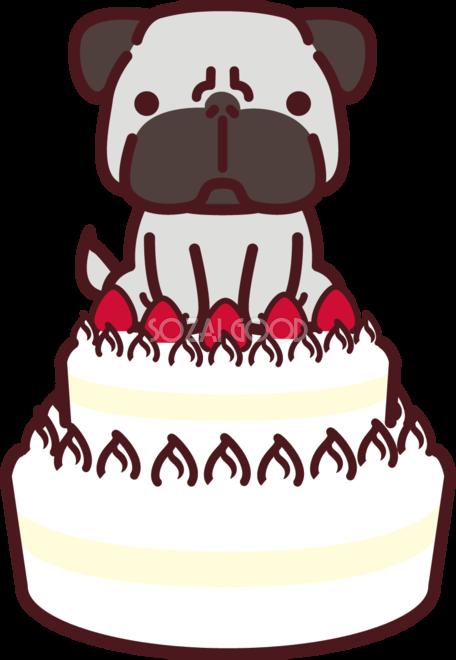 二段重ねのバースデーケーキの上にパグ犬が座っている かわいい犬の
