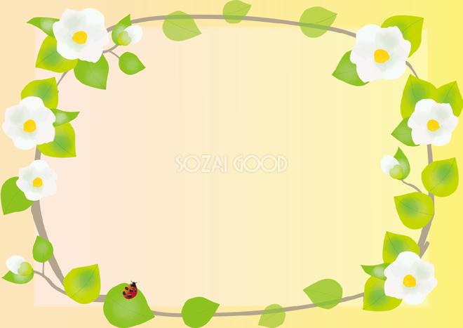 夏椿なつつばき夏6月 7月の花フレーム無料イラスト73675 素材good