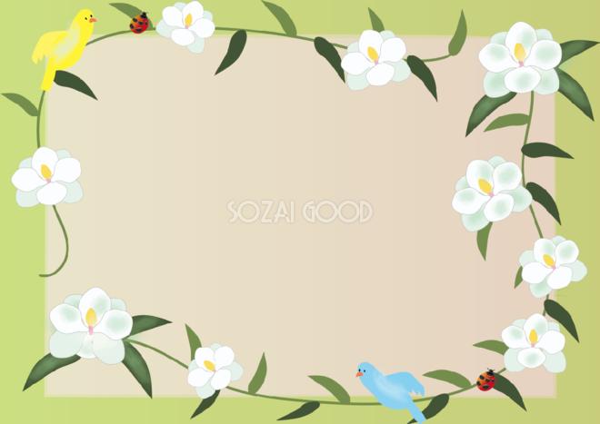 泰山木 たいさんぼく 夏6月 7月の花フレーム無料イラスト 素材good