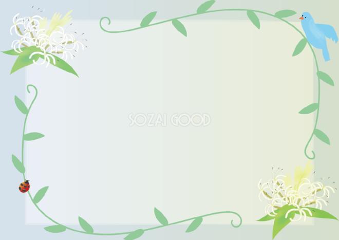 浜木綿はまゆう夏7月 9月の花フレーム無料イラスト73786 素材good