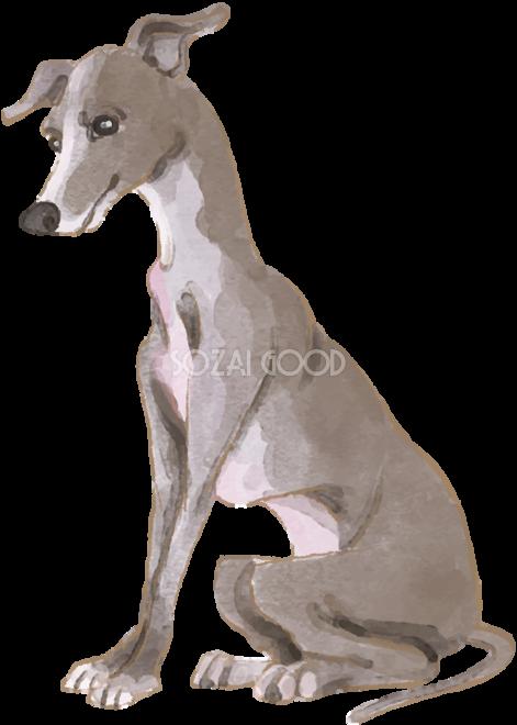 イタリアングレーハウンド座り姿犬のリアルかっこいい無料イラスト