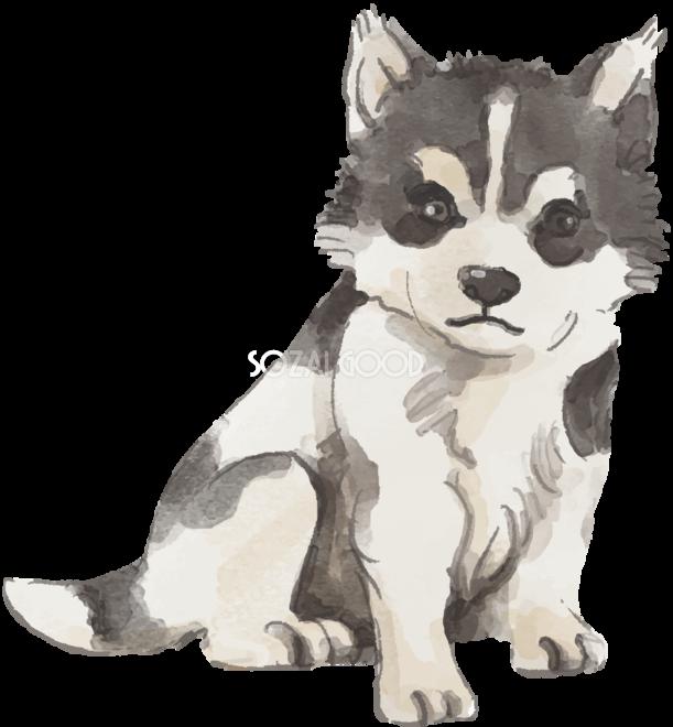 シベリアンハスキー座り姿子犬犬のリアルかっこいい無料イラスト