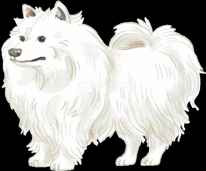 日本スピッツ立ち姿犬のリアルかっこいい無料イラスト74705 素材good