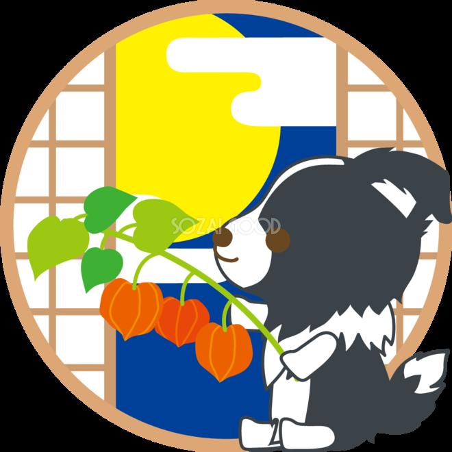 ボーダーコリー犬の十五夜ほおずきを持つ動物無料イラスト75192