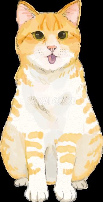 猫 トラ柄の雑種ミックス の変顔リアル無料フリーイラスト83257 素材good