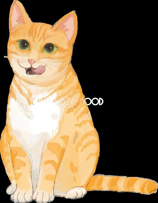 猫 トラ柄の雑種ミックス 口元をペロペロ舐めるリアル無料フリーイラスト301 素材good