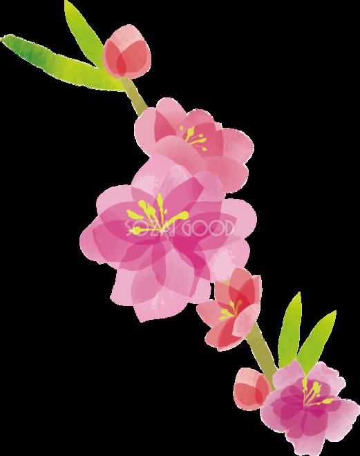 桃の花 ひな祭り無料フリーイラスト83335 素材good