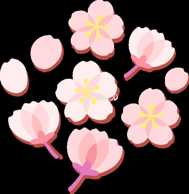 かわいい桜の花の押し花風の開花イラスト無料フリー83339 素材good