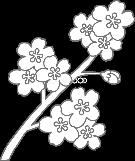 かわいい桜の塗り絵高齢者向けの線が細めのキレイ系イラスト無料